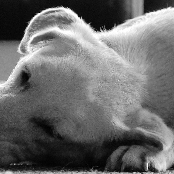 Sponsor zum Thema Tierschutz gesucht